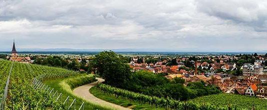 Alsace wine region