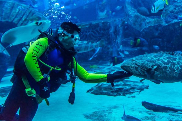 Diving with ocean fish at Dubai Aquarium