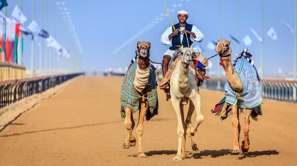 Things to do in Dubai - camel racing